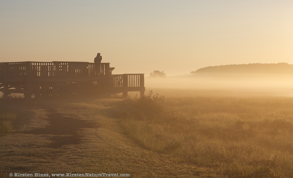 Birder in sunrise mist