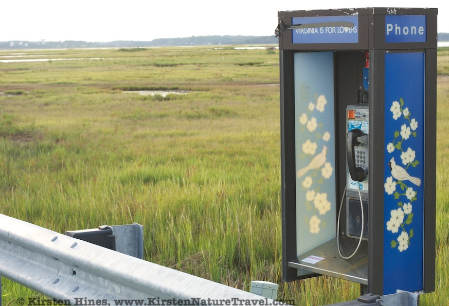 Phone booth in the marsh