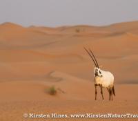 Oryx Desert