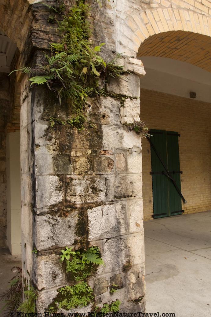 Frederiksted column