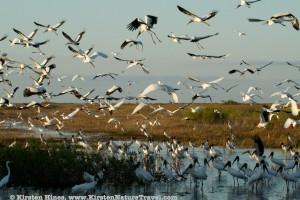 Mixed Flock (2)