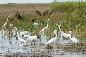 Mixed Flock