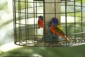 BirdSupplies