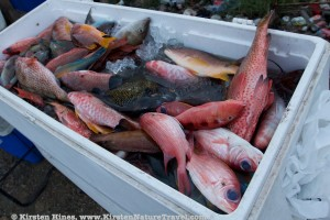 """""""Pot Fish"""""""