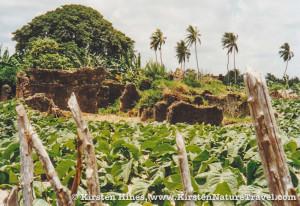 1995_Kenya-1