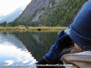 Watching Grizzly Bears from the zodiac.