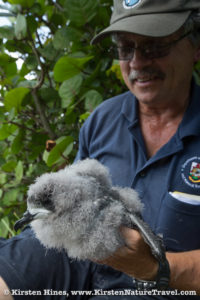 Jeremy Madeiros with Bermuda Petrel chick