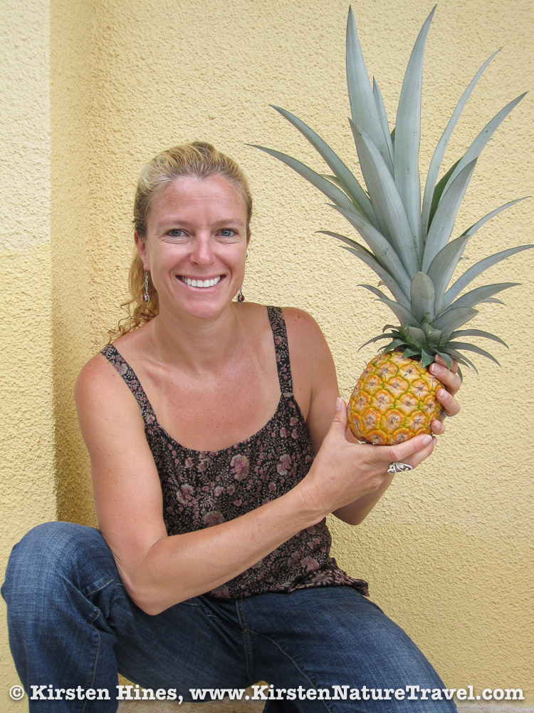My first homegrown pineapple; a bit top-heavy but delicious nonetheless.