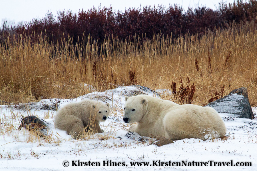 Nature & Travel Blog | Nature Writing & Photography by Kirsten Hines
